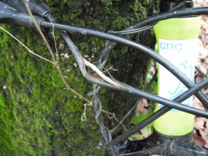 La causa de mi hicking de la trepada al árbol de T3...nomás poquito abierto...